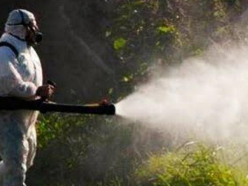 Llaman a sector salud,a combatir casos de dengue