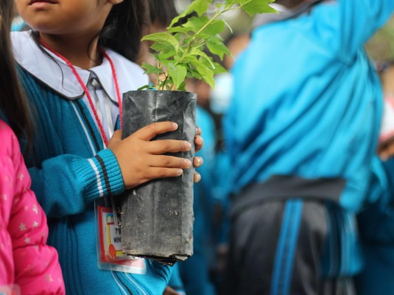 Llega a su meta Corregidora Reforesta Contigo