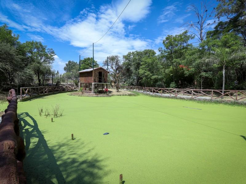 Llega la 'selva amazónica' al Zoo León