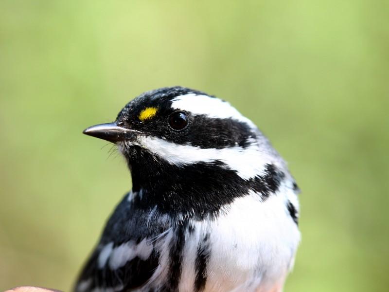 Llegan aves migratorias al bosque La Primavera