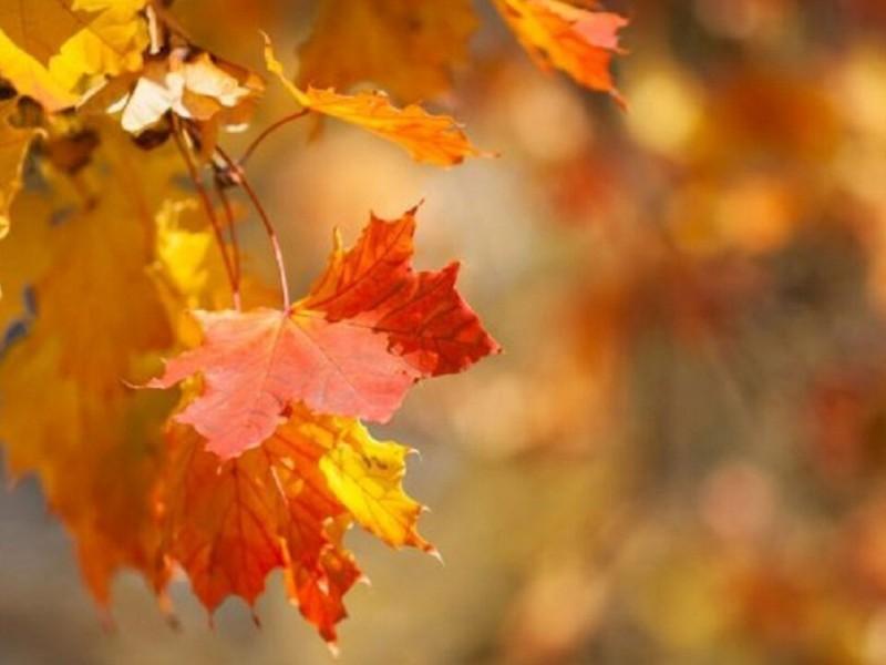 Llegó el otoño, durará 89 días