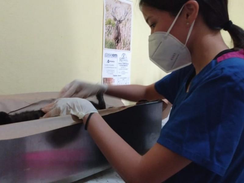 Lleva Sector Salud campaña de esterilización gratuita
