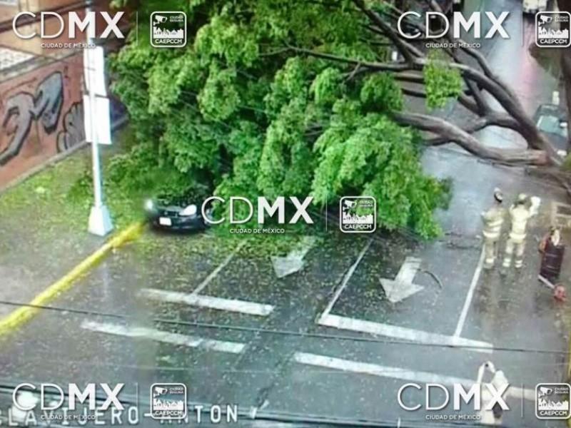 Lluvia derriba árbol en la GAM