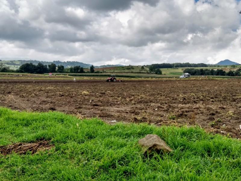Lluvias afectan la producción de cultivos en la entidad