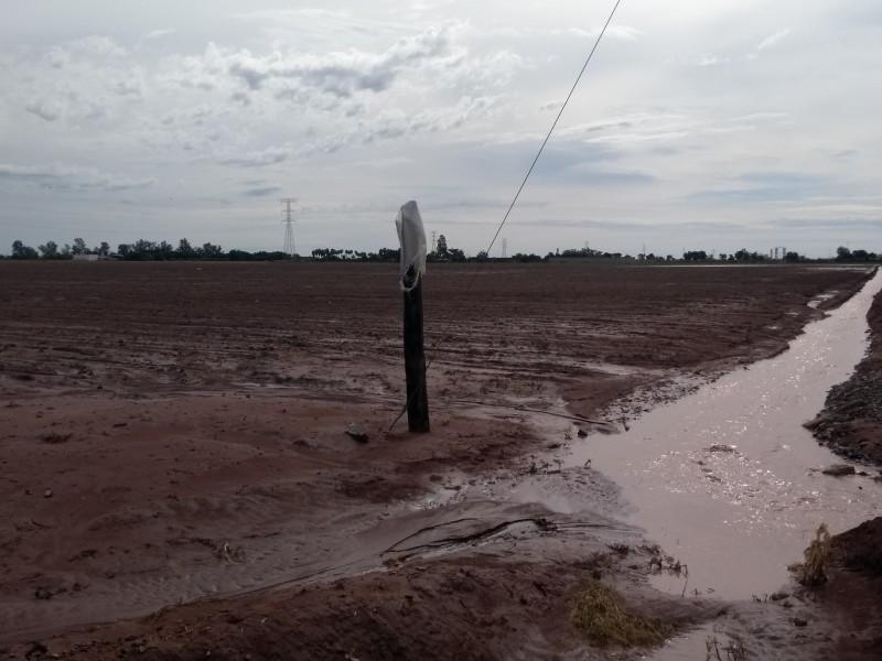 Lluvias dejan fuertes daños en el sector agrícola