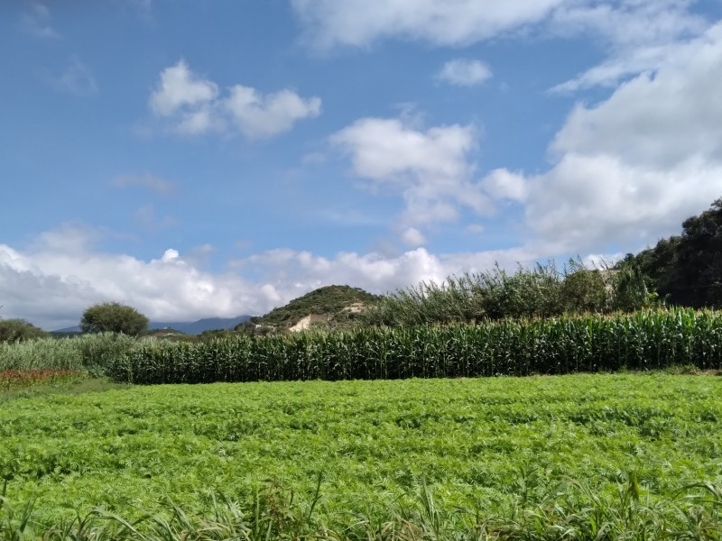 Lluvias del último año reactivan campos de la región