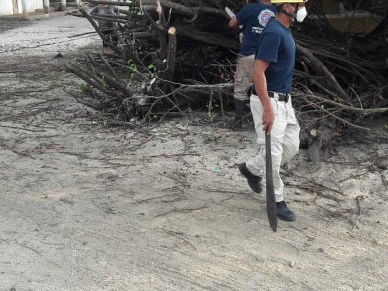 Lluvias derriban árboles en Bahía de Banderas