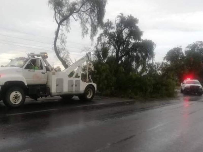 Lluvias derriban árboles en Tepeaca y Los Reyes de Juárez