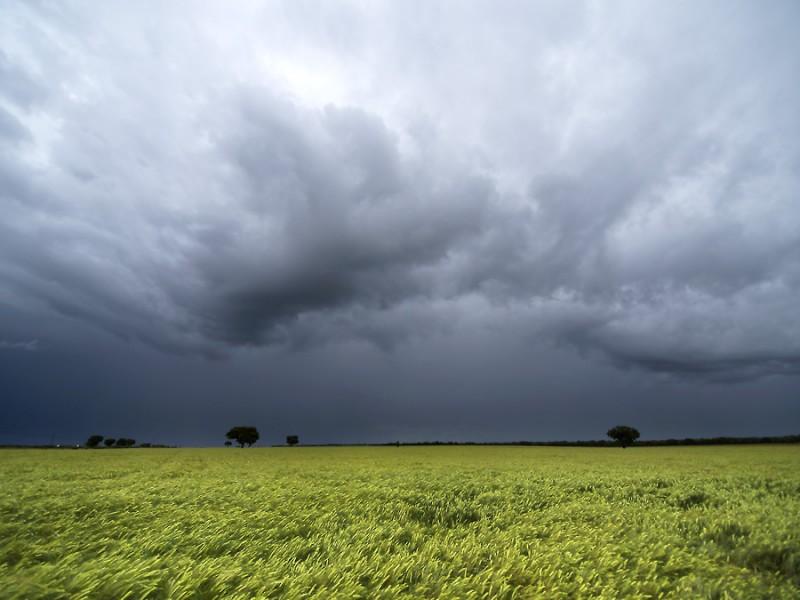 Lluvias en Sombrerete afectaron zona agrícola