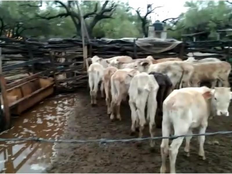 Lluvias favorecieron al sector agropecuario en municipios del Sur