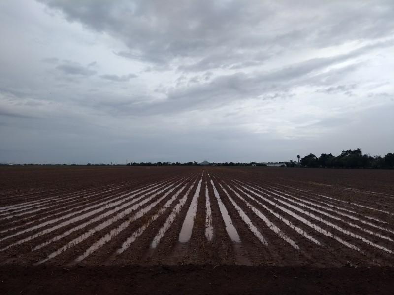 Lluvias incrementan gasto operativo de productores agrícolas