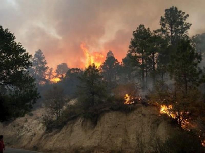 Logran total control del incendio en Sierra de Arteaga