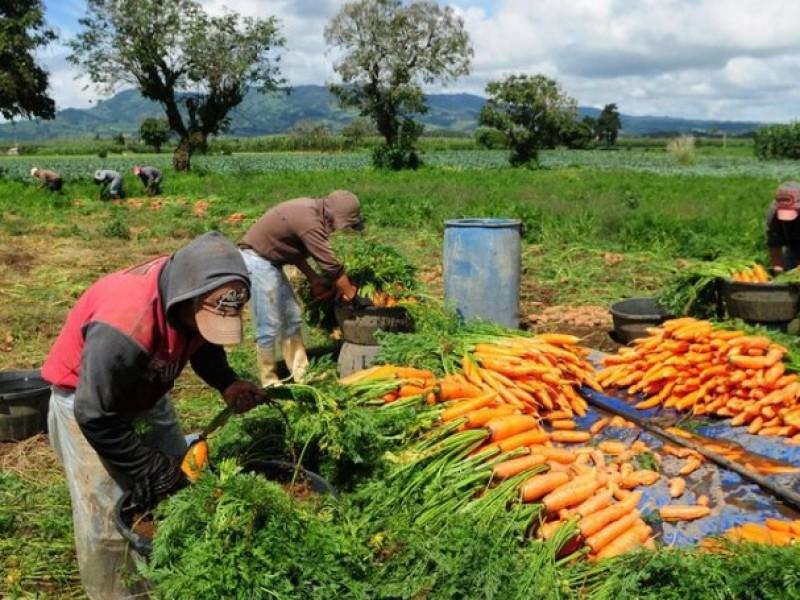 Los agricultores también son héroes frente a la pandemia: FAO