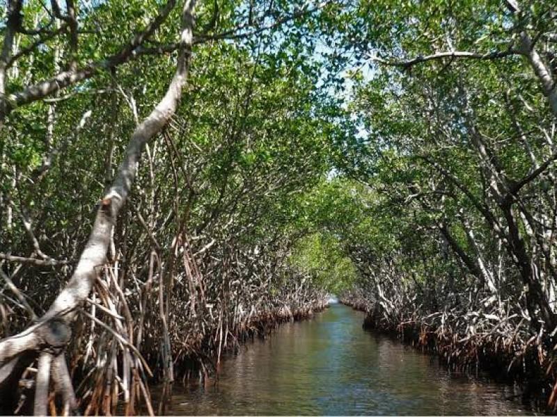 Los manglares son ecosistemas que juegan un importante rol ecológico