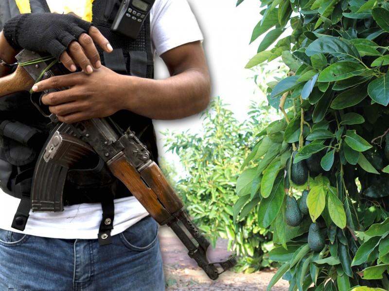 🥑Los narcos están haciendo huachicol con el AGUACATE