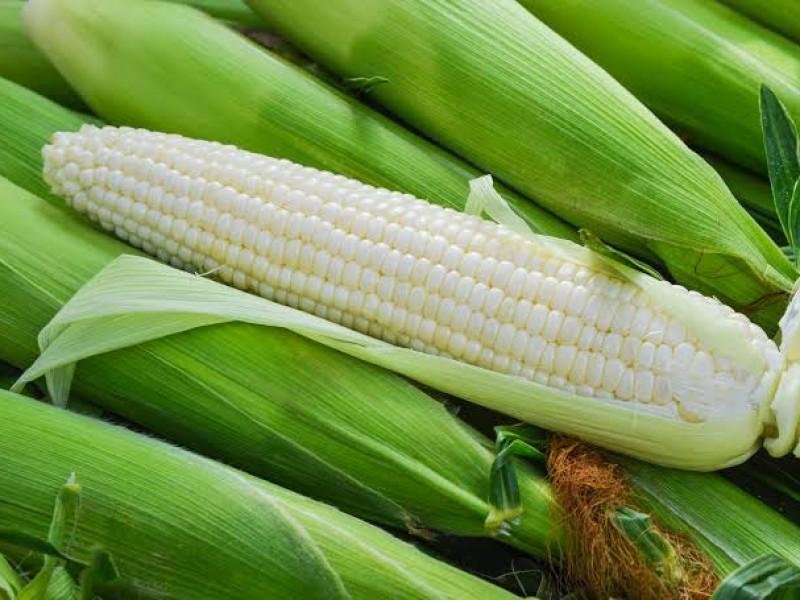 Maíz y trigo con pérdidas semanales