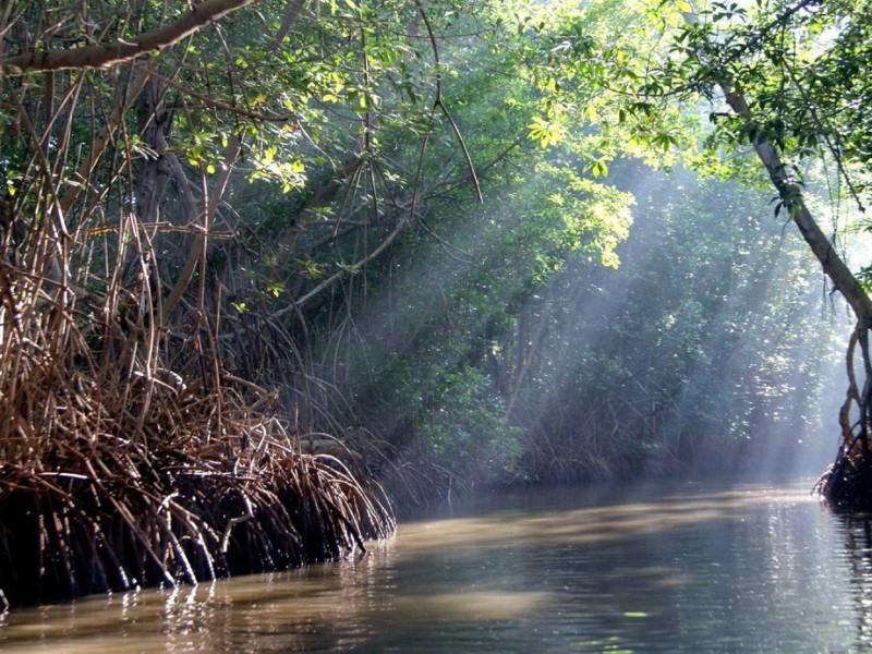 Manglares se pierden en Chiapas