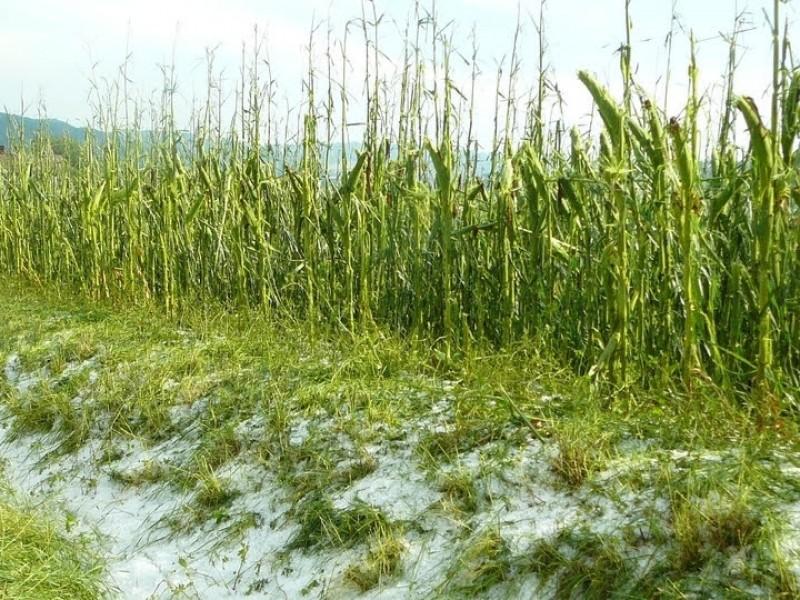 Mantienen alerta por posibles heladas en cultivos