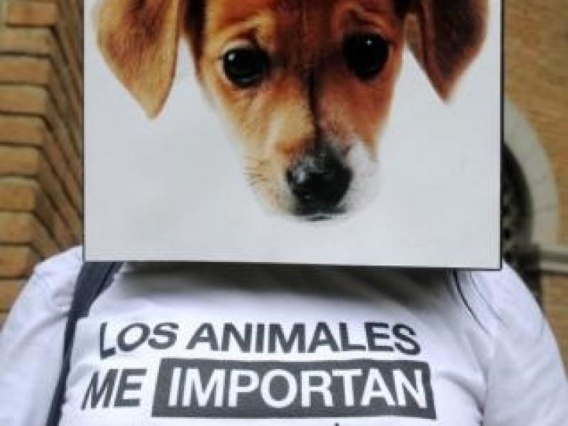 Marchan contra la violencia animal