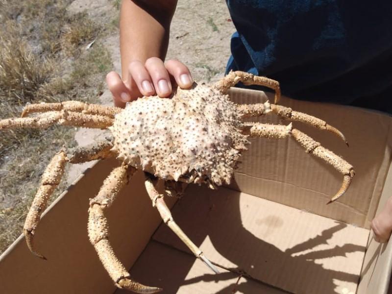 Marea roja pudo ocasionar muerte de aves y cangrejos
