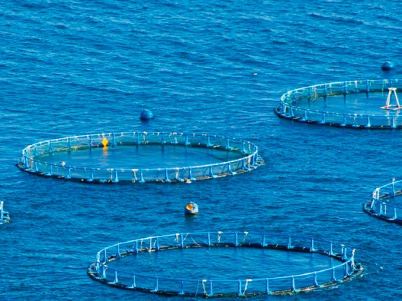 Maricultura opción para la actividad pesquera en México; Líderes