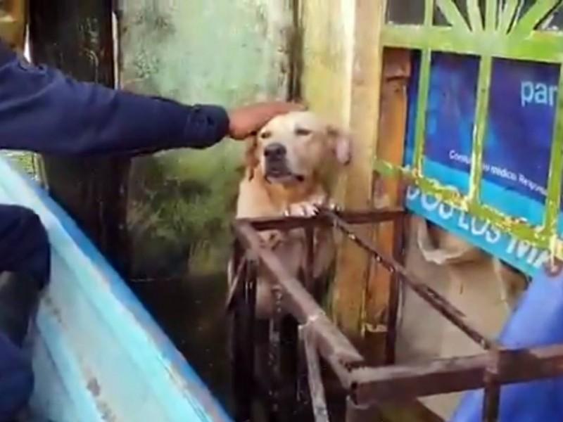 Marinos adoptan perro al que rescataron las inundaciones de Tabasco