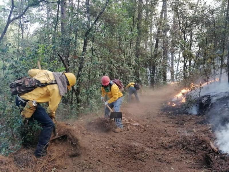 Más 500 hectáreas de bosque afectadas por incendio en Áporo-Senguio