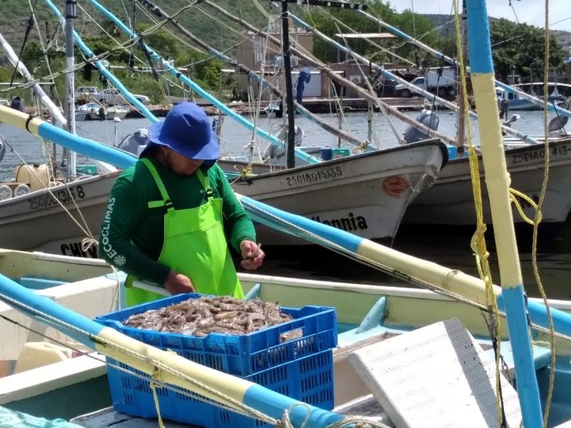 Más de 25 mil pescadores se reactivan en Sinaloa