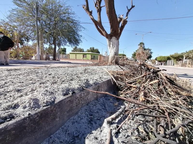 Más de 40 árboles fueron lesionados por poda y fuego