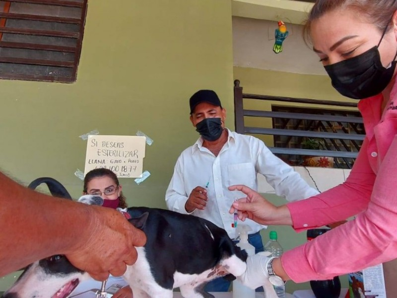 Más de 50 mascotas fueron vacunadas en la Yucatán