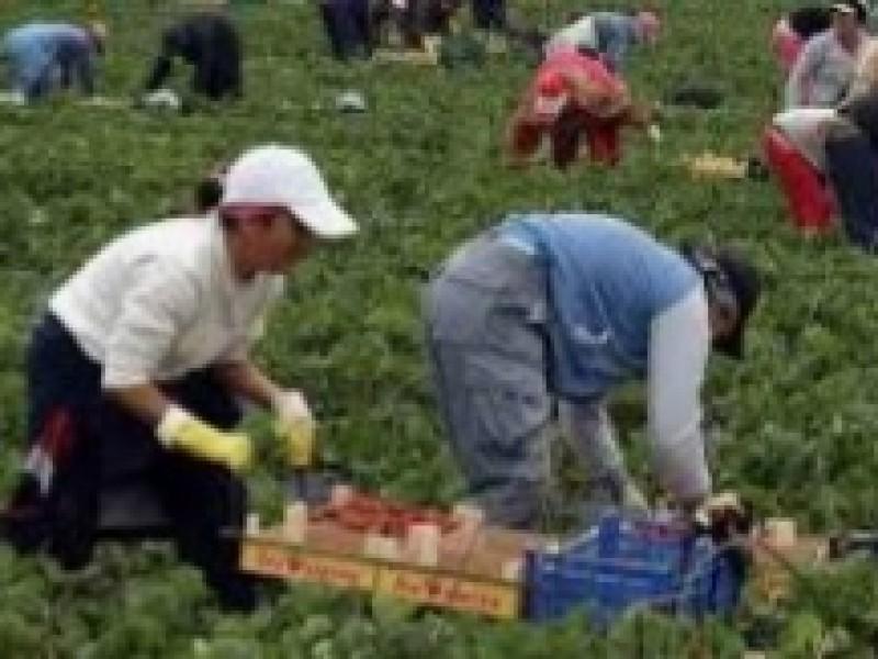 Más de mil jornaleros Chiapanecos laboran en  Estados Unidos