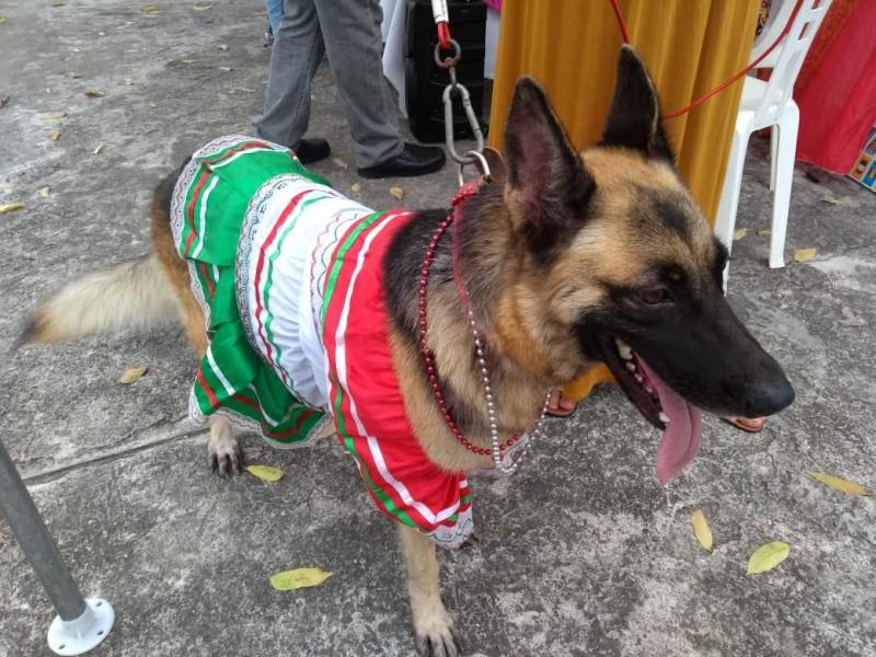 Mascotas muy a la mexicana  en Tuxpan