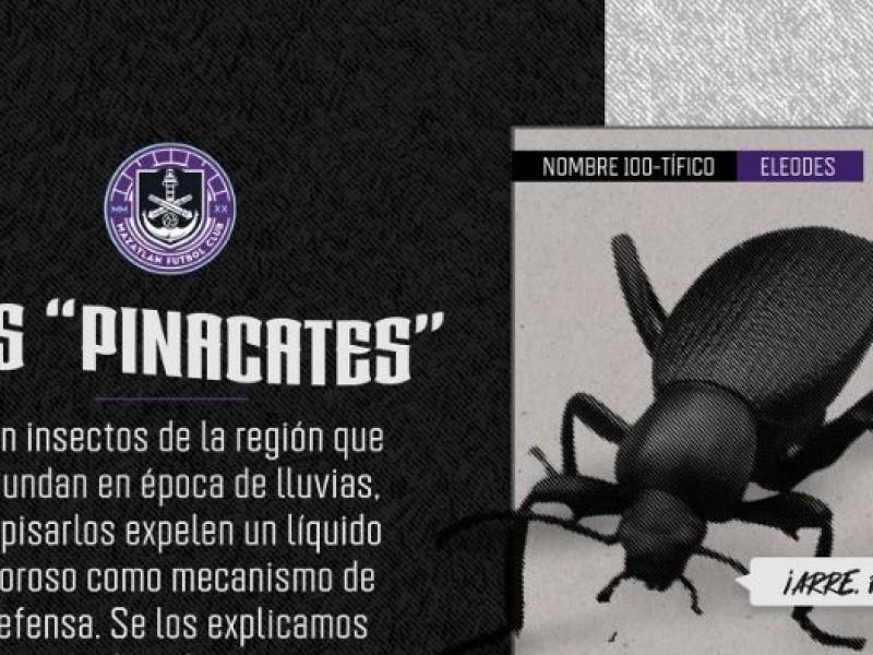 Mazaltán FC objeto de burlas en redes sociales