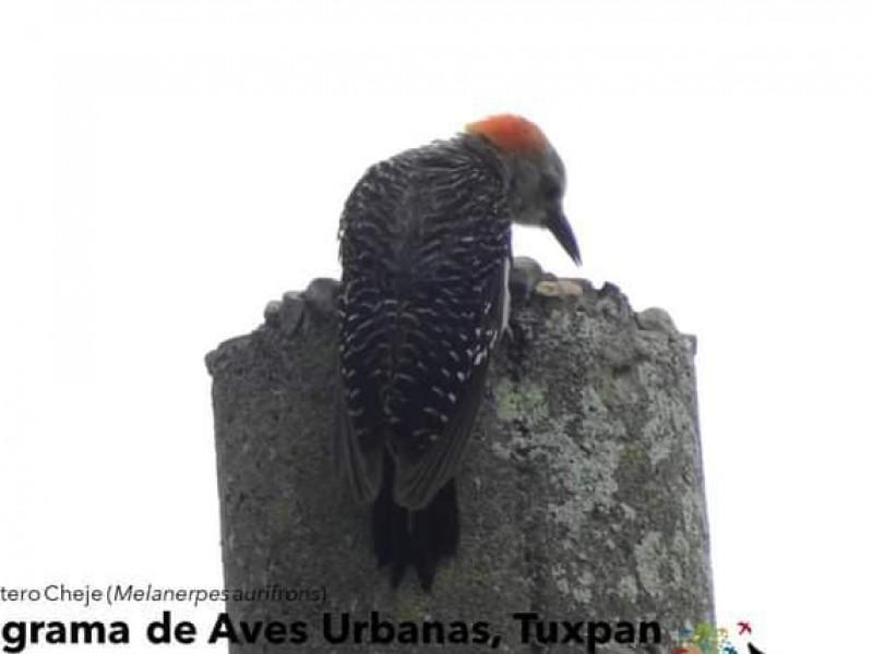 Mediante Conteo de Aves constatan equilibrio forestal de Tuxpan