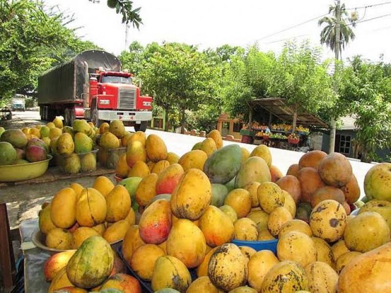 Mejoran nayaritas técnica para producir más y mejor mango