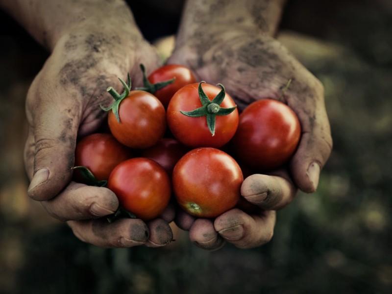México y Estados Unidos logran acuerdo de tomate
