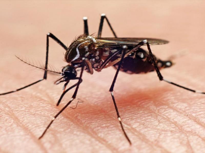 Michoacán registra una muerte por dengue