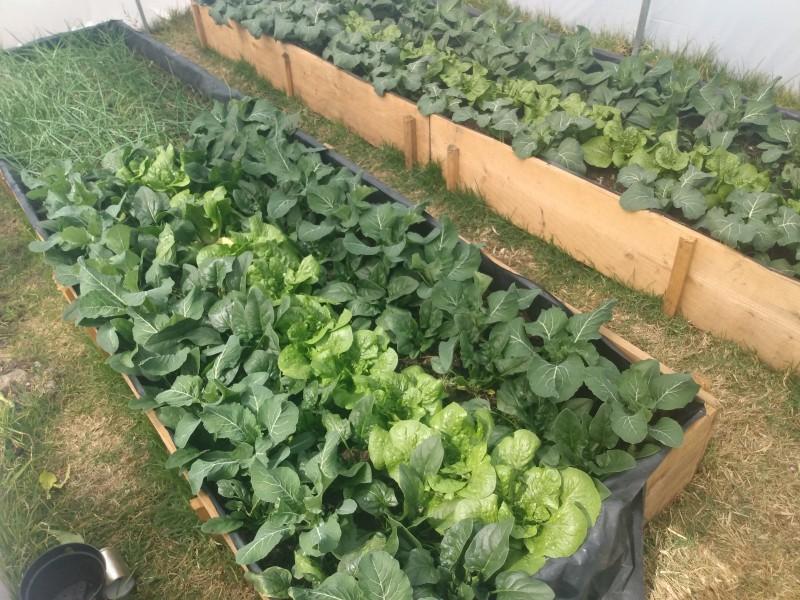 Micro granjas ayudan a personas de escasos recursos