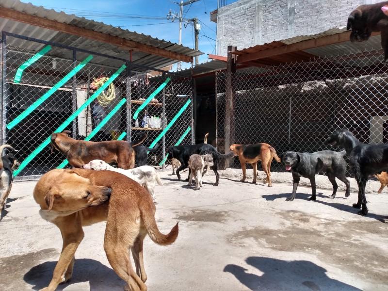 Miedo al coronavirus disminuyó la adopción de perros