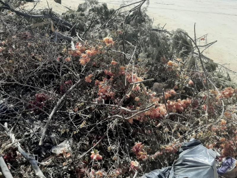 Molestia a ciudadanos falta de recolección de ramas y cacharros