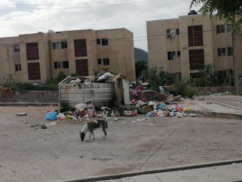 Moscas y animales muertos en contenedores de basura del Pedregal