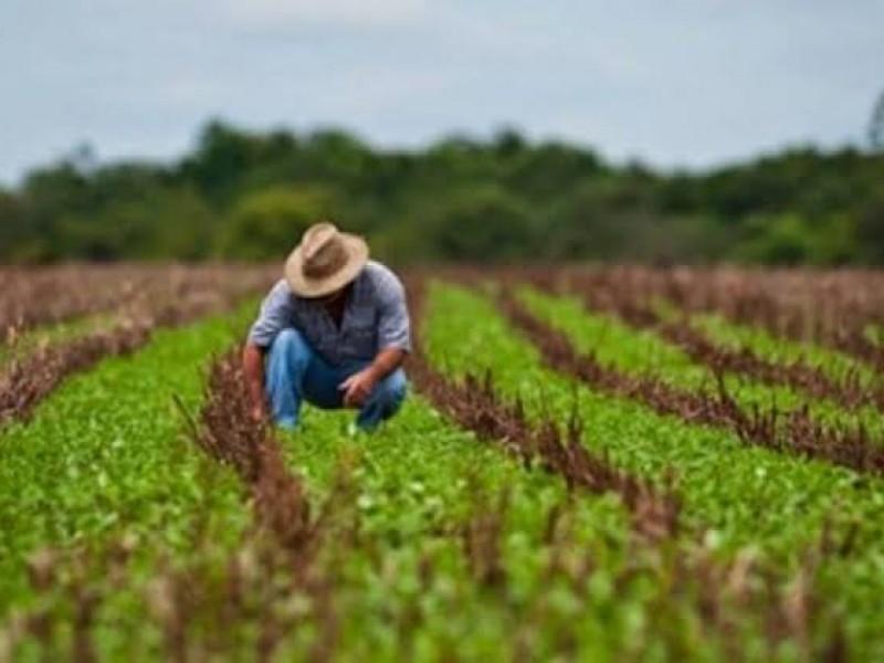 Motivan a productores a buscar mercados más grandes
