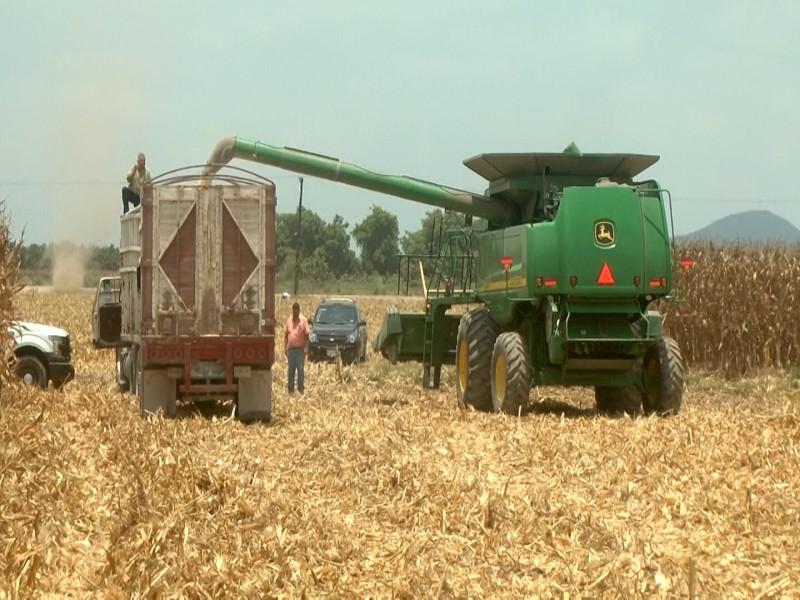 Movilización de cosechas beneficiará al Transporte de Carga