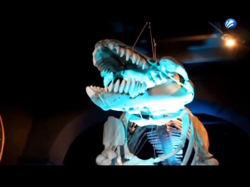 Museo de la ballena cerrará definitivamente