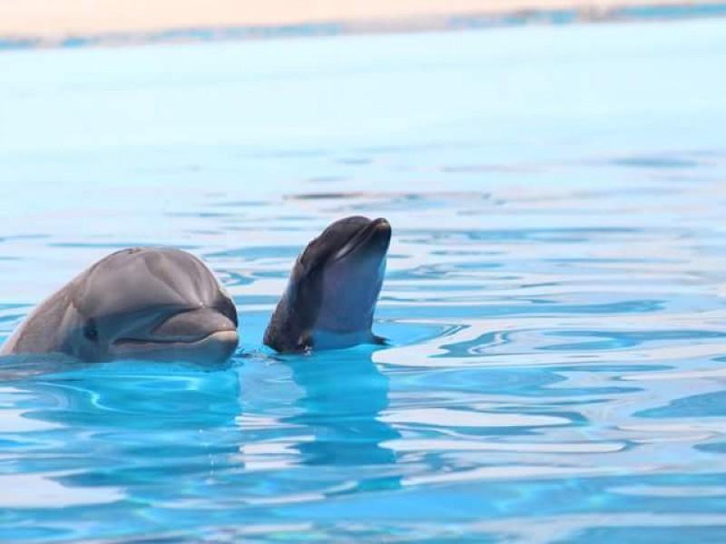 Nace bebé delfín en Delfinario Sonora
