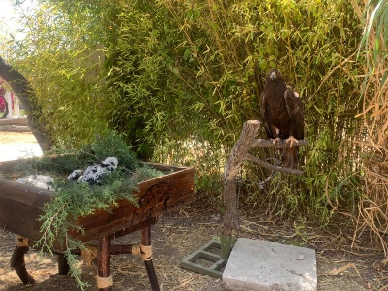 Nacen dos polluelos de Águilar Real en Africam Safari