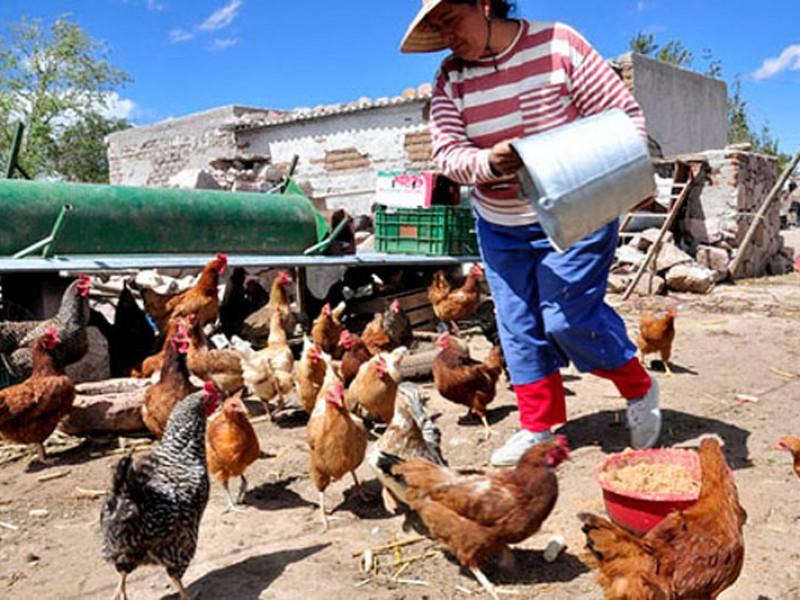 Nayarit a la baja en producción avícola
