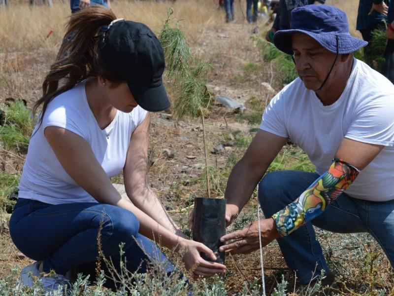 Nayarit registra 73% de éxito en reforestaciones