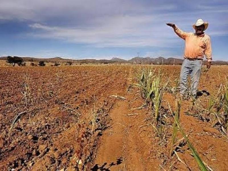 Nayarit registra alta intensidad de sequía en sus 20 municipios