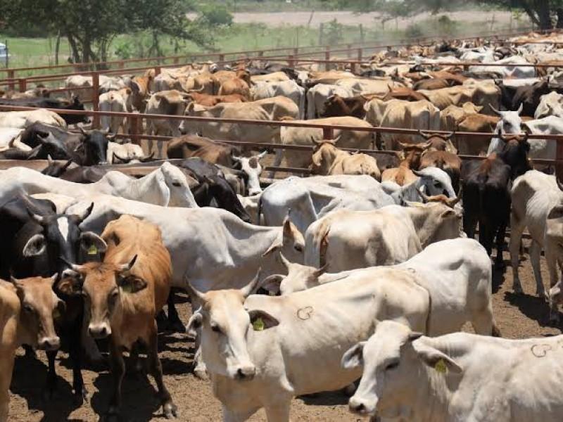Nayarit y 10 estados más afectados por reclasificación de ganado